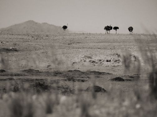 Somewhere in Africa. Photographed by Anna Mizgajska