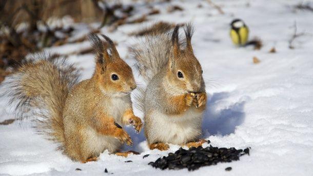 Samen und Nüsse sind die ideale Nahrung für die winterlichen Gartenbesucher.  (Quelle: Thinkstock by Getty-Images)