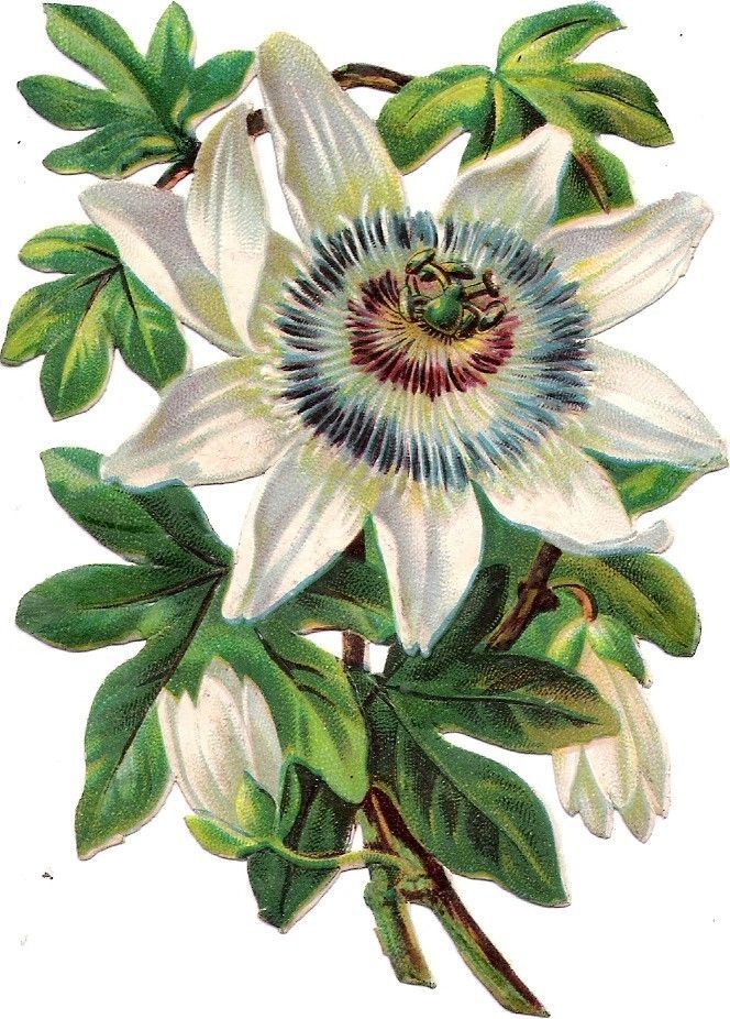 Oblaten Glanzbild scrap die cut  chromo Blume flower  13 cm