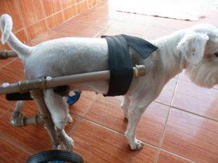 Nem sempre é fácil encontrar pra comprar uma cadeira de rodas para cachorro. Neste passo-a-passo ensinamos você a fazer uma em casa!