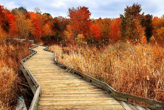 Huntley Meadows Park in Fairfax County, VA. I swear I can smell the air