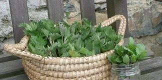 Лекарственные свойства крапивы - Лекарственные растения