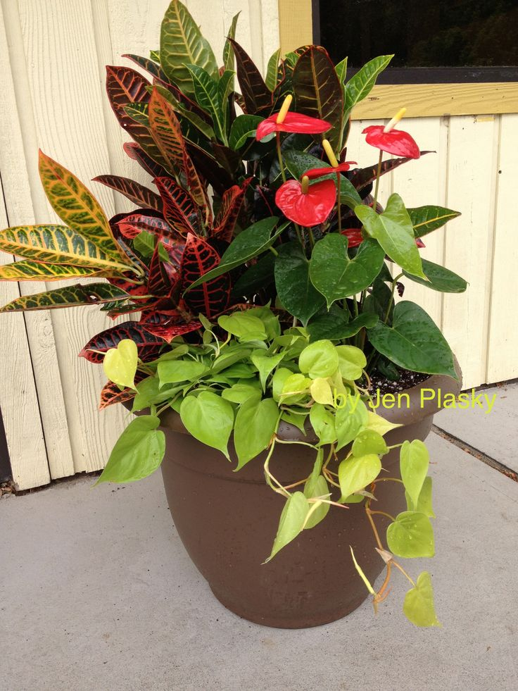 Croton, Antherium, Philodendron Fall planters, Container