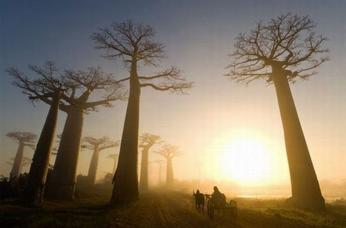 National Geographic Unique Moments (36 pics)