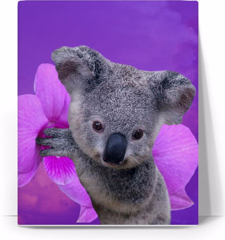 Check out my new product https://www.rageon.com/products/koala-and-orchids-art-canvas-print?aff=BWeX on RageOn!