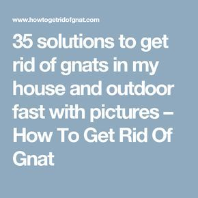 35 solutions to get rid of gnats in my house and outdoor fast with pictures – How To Get Rid Of Gnat