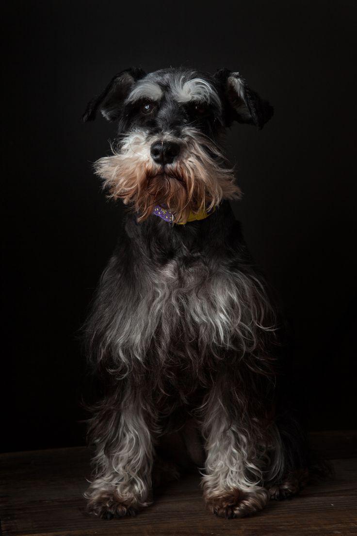 #essexontario #petvalu #petphotography #dog #dogphotography #essexphotographer #windsorfamilyphotographer #dogportrait
