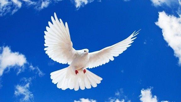 Beyaz Güvencin #wallpaper #güvercin #göküzü #sky #dove