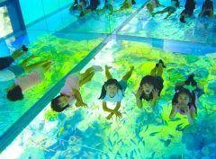 福井県に来たらぜひ越前松島水族館に行ってみてください この水族館は海の生き物たちを水槽から観察するだけでなく触れて学ぶことができるんです 一番の見どころは上から覗く水槽 大きな床一面がガラス張りになった水槽で足下を魚たちが泳ぐ姿は幻想的ですよ() tags[福井県]