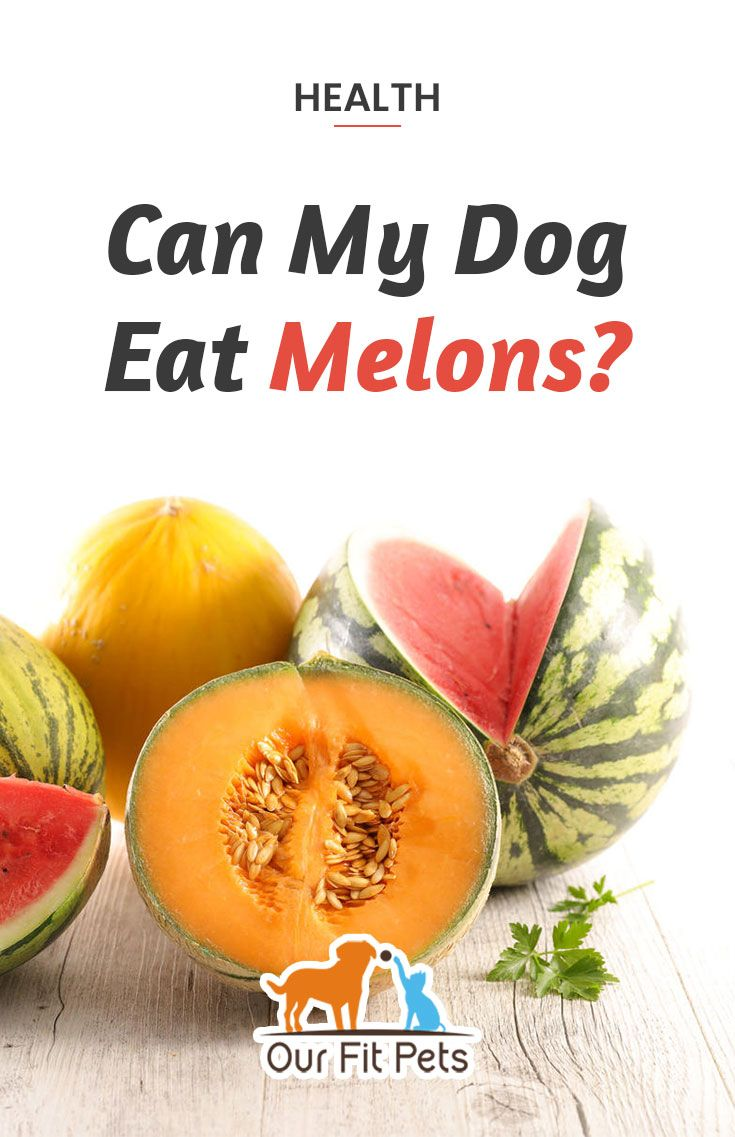 Cantaloupe Dogs : Dogs should not be fed cantaloupe rinds, not because they are necessarily toxic to their digestive system, but because they are rather hard to digest.