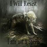 No sheep here.