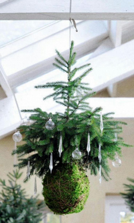 Kerst idee: een vliegende blauwspar kokedama. bron: VTwonen #kerstboom #kokedama #nieuwestijl #orgineel