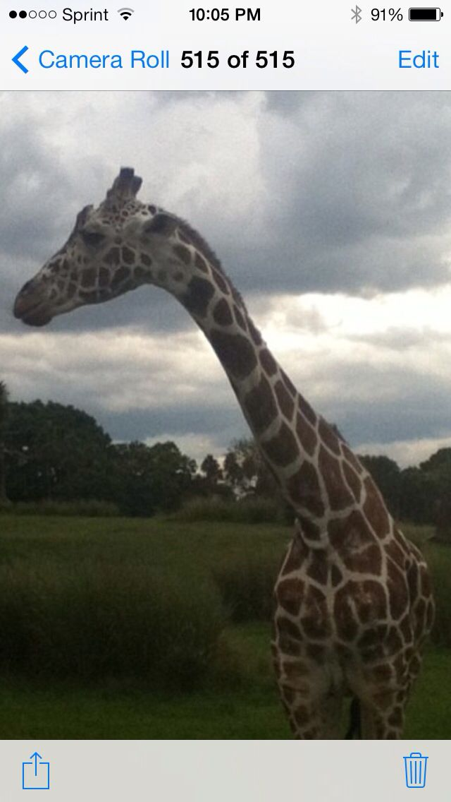Giraffe up-close!