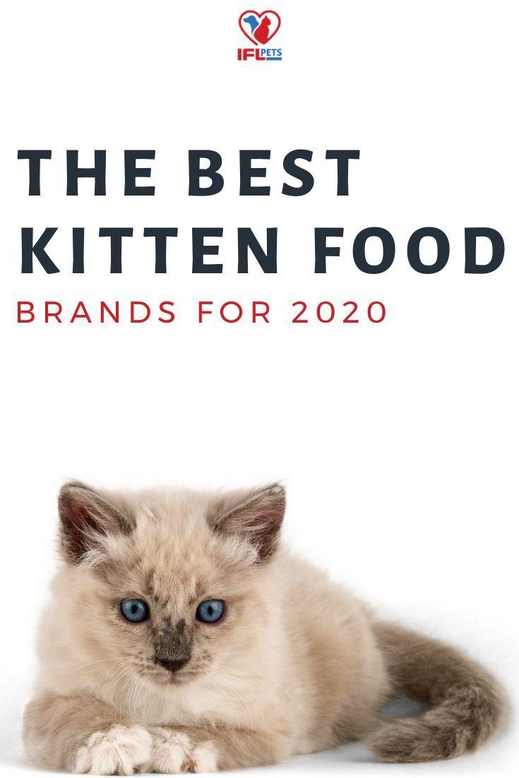 2020 Best Kitten Food Brands Ifl Pets In 2020 Kitten Food Brands Kitten Food Cat Food Brands