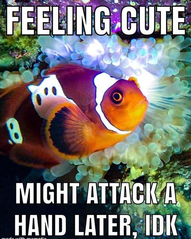marinedepot #happyreefkeeping #fishmeme #clownfish #saltwaterfishtank  :unknown | Saltwater fish tanks, Fishing memes, Clown fish