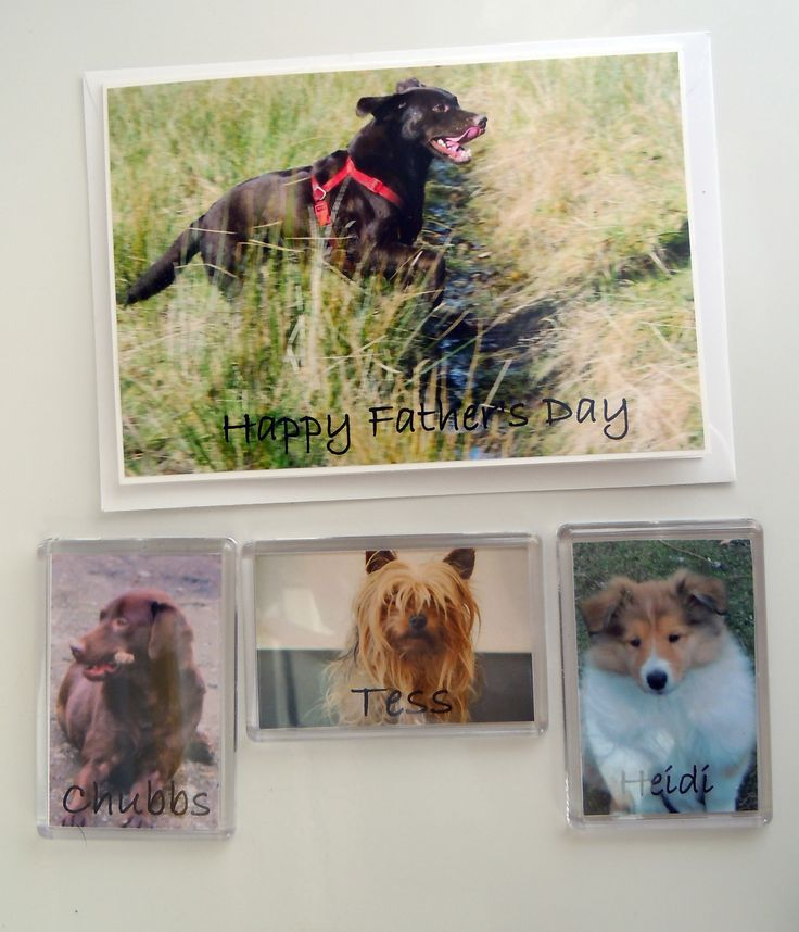 Fridge Magnets and cards