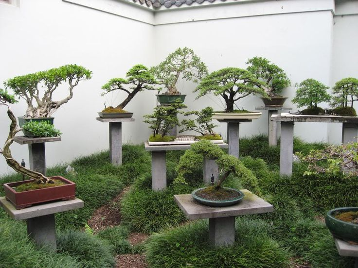 Backyard Bonsai Display : bonsai garden w concrete monkey poles more bonsai garden monkey poles