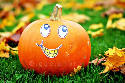 mr happy pumpkin is posing again... O‿o