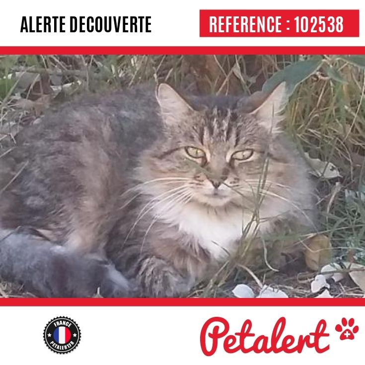 16.10.2016 / Chat / Laluque / Landes / France