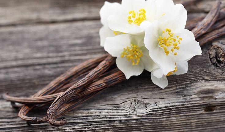 Das Beauty-ABC: Vanille Vanille, die aus Mexiko und Mittelamerika stammt, ist heute eines der beliebtesten Gewürze der Welt. Die alten Indianerstämme haben sie jedoch nicht nur für Ihren Geschmack, sondern auch für die medizinischen, und heilenden Eigenschaften geschätzt.