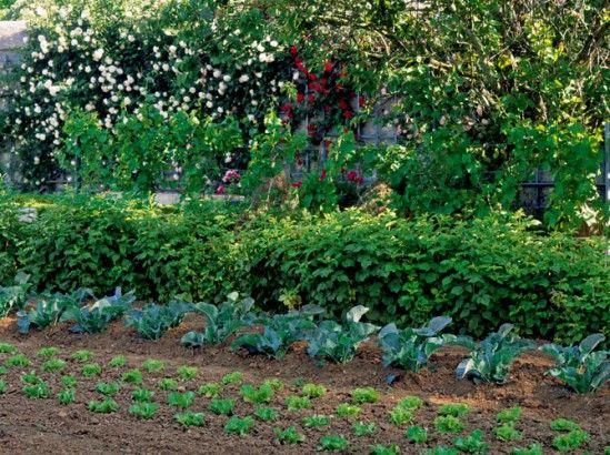 Les 25 meilleures id es concernant plantes d 39 ombre de for Jardin ombre