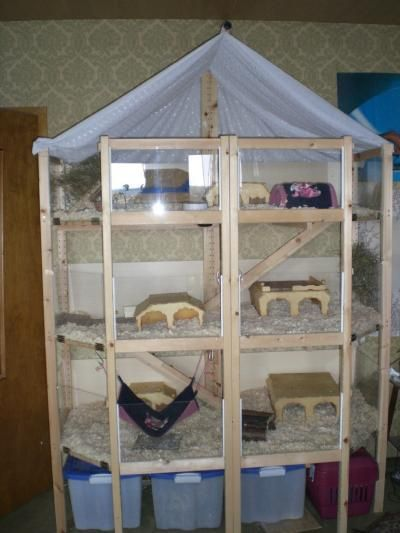 Hedgehog cages
