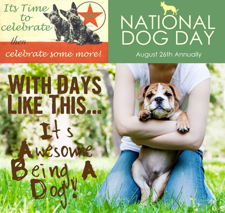 National Dog Day is August 26th!