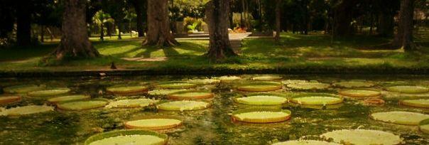 Water lilies at the Pamplemousses botanical gardens near Port Louis, Mauritius