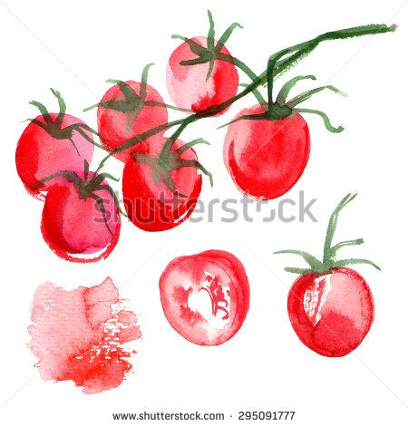 Set tomatoes drawn background. Study vegetables. Watercolor food
