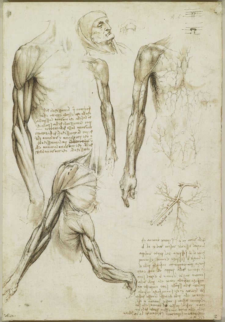 90 best Anatomy images on Pinterest | Anatomy, Anatomy reference and ...