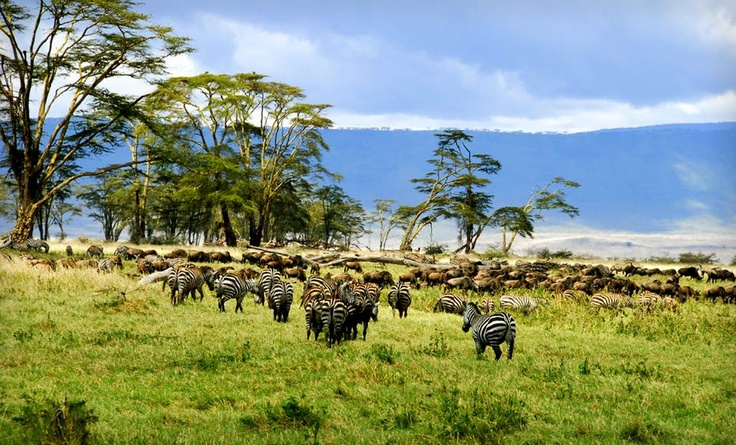 Groupon - Eight-Day Tour of Tanzania with Airfare from ET African Journeys. Groupon deal price: $2,899.00