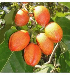 Kacang Amazon Rp 95,000
