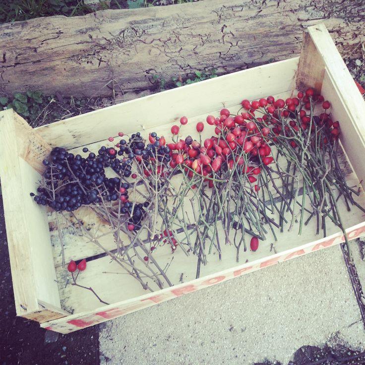 passeggiando #berries