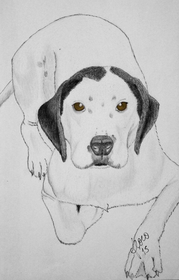 #pochoclo #dog #art #pencil #lovedogs #arte #perro #grafito #blackandwhite #floroperlini
