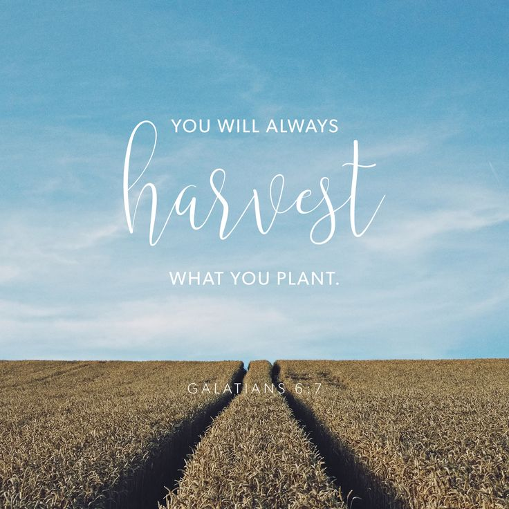 """""""Do not be deceived, God is not mocked; for whatever a man sows, that he will also reap. For he who sows to his flesh will of the flesh reap corruption, but he who sows to the Spirit will of the Spirit reap everlasting life."""" Galatians 6:7-8 NKJV"""