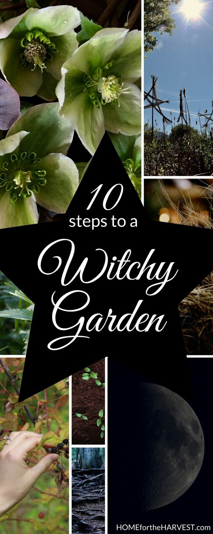 How to Create a Witchy Garden - Grow your own witch's garden by the moonlight with herbs and other magical plants | Home for the Harvest