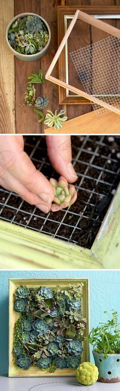 mini coltivazione piante grasse