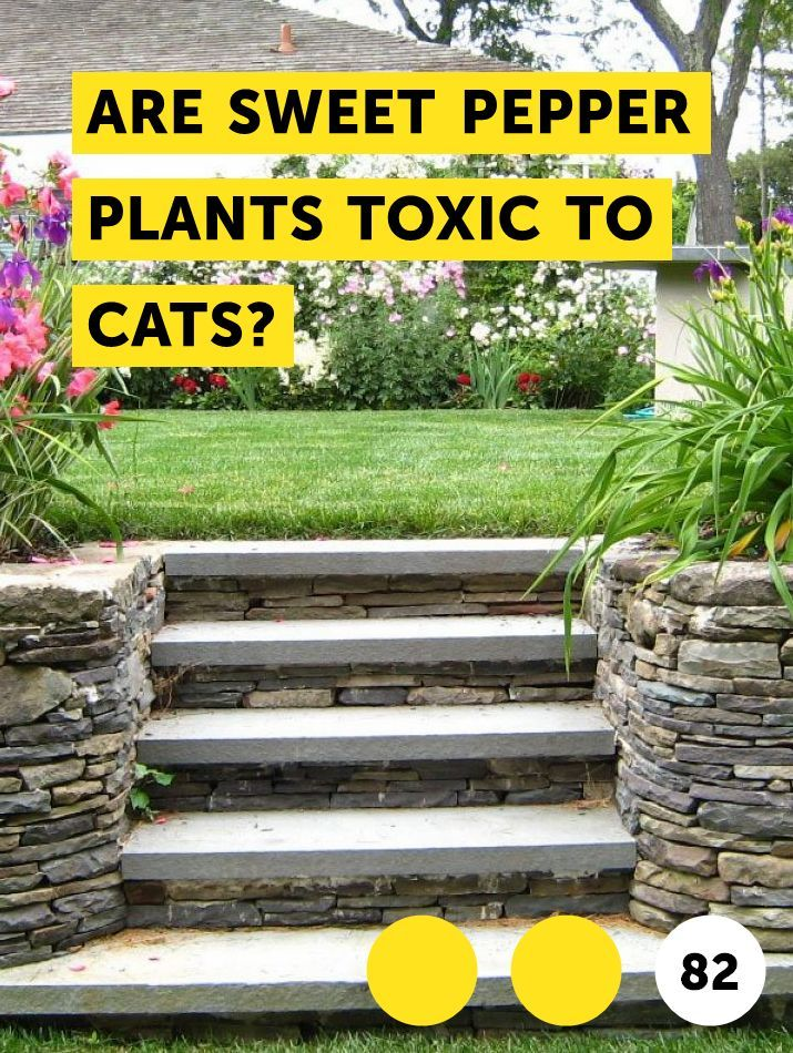 Are Sweet Pepper Plants Toxic to Cats? Growing