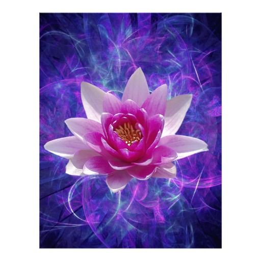 the  best lotus flower meanings ideas on   meaning of, Beautiful flower