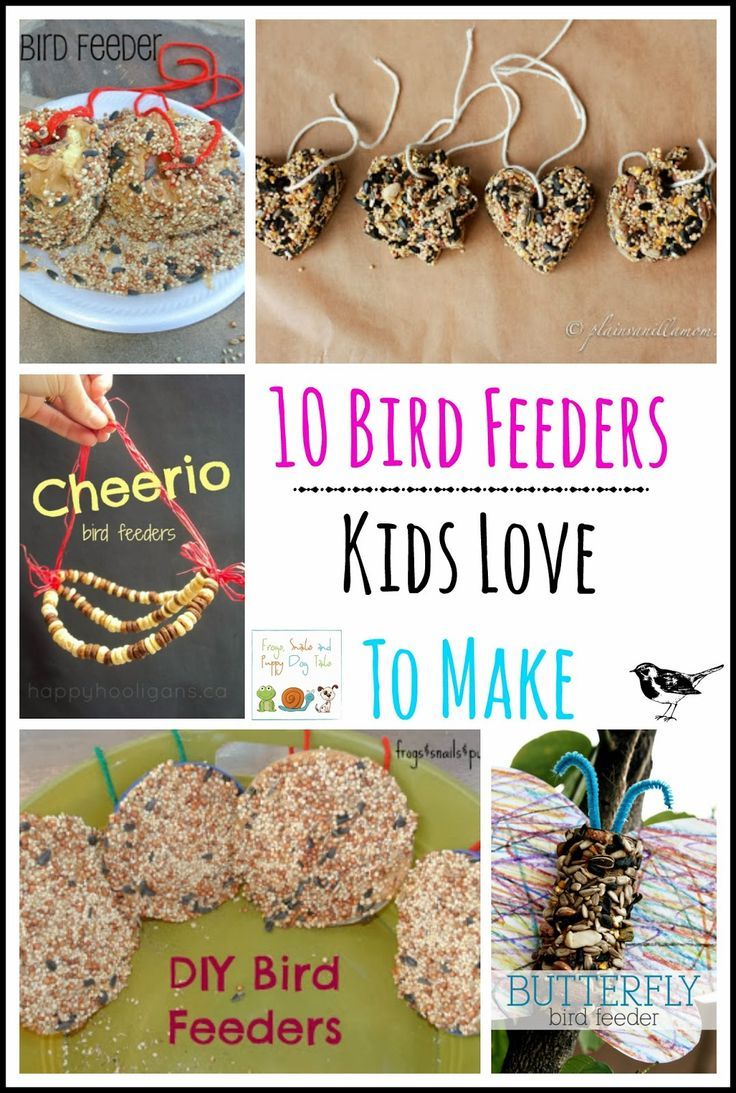 10 bird feeders kids love to make sodas birds and bird