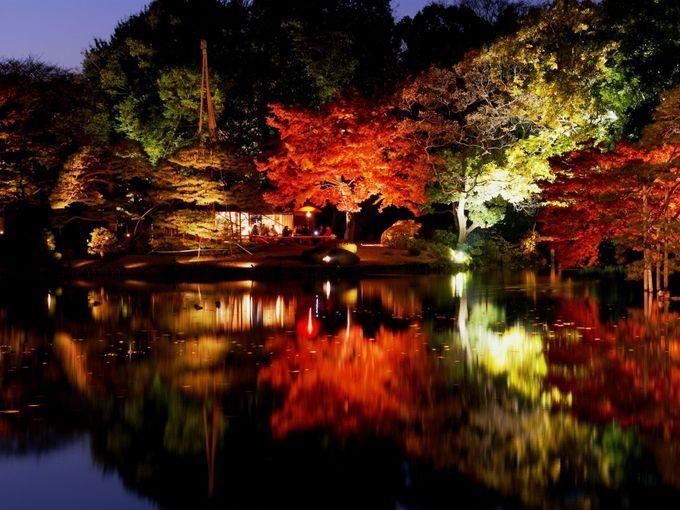 オススメは夜!東京で一番ロマンティックな紅葉スポット「六義園」とは | RETRIP