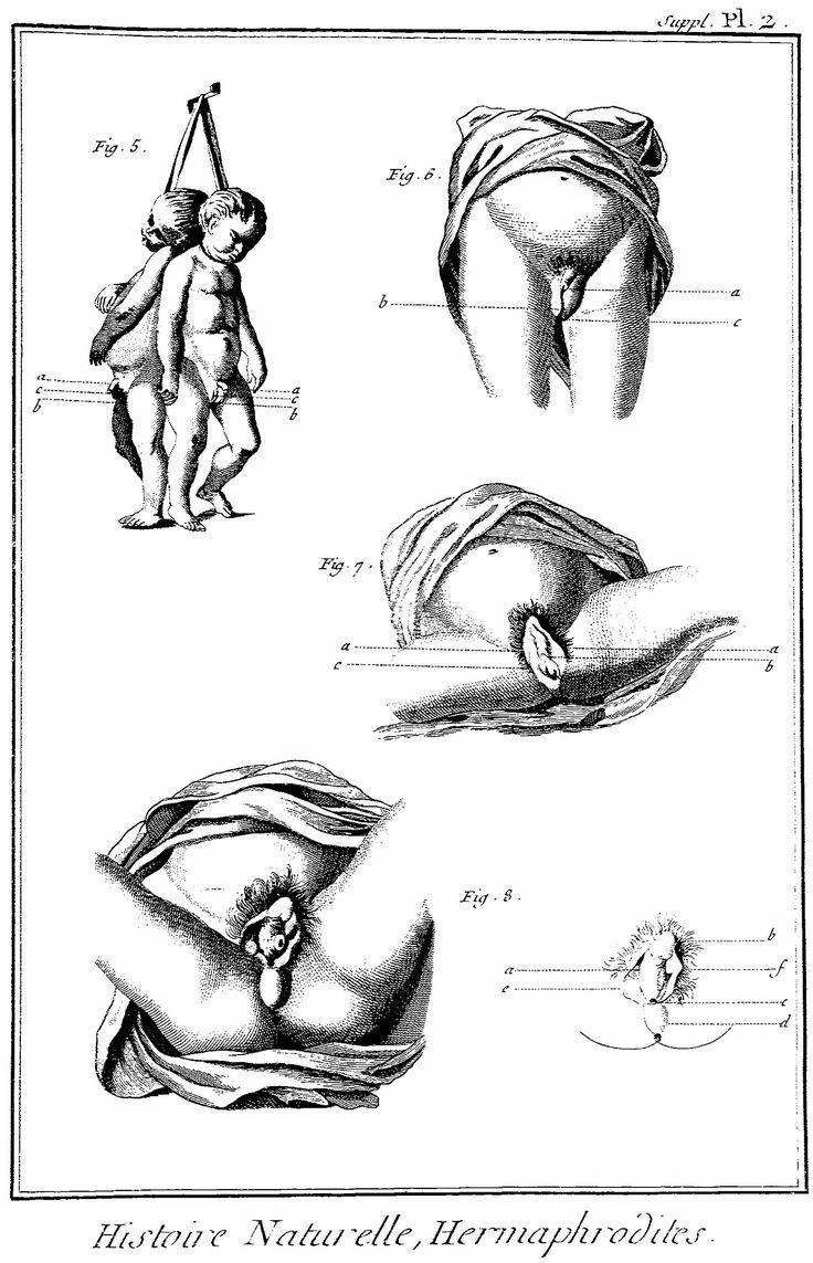 human-hermaphrodites