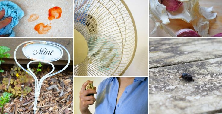 Summer is much nicer when you know how to keep bugs away! Prevent mosquito bites, ant infestations & other bug problems with these easy DIY tips!