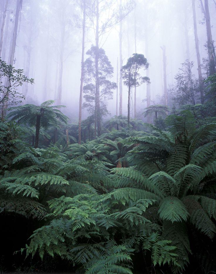 30 beautiful reasons to visit Australia - Yarra Ranges National Park
