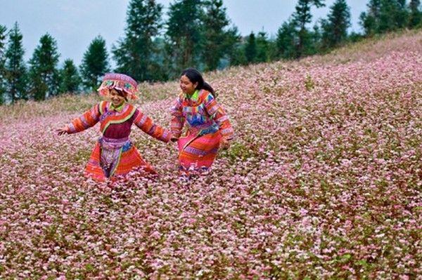 Du lịch Hà Giang mùa tam giác mạch nở, nhất là tại Xín Mần, cả một vùng đất rộng lớnnhư bồng bềnh trong sắc hồng phớt của hàng ngàn nụ hoa