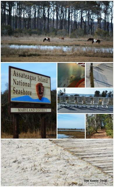 Assateague Island National Seashore, Maryland - Maryland must visit places