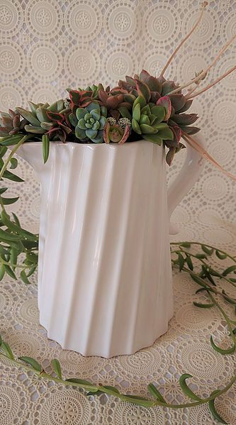 Wedding Gift Delivery Brisbane : ... Succulent wedding centrepieces and gifts for Brisbane and Gold Coast