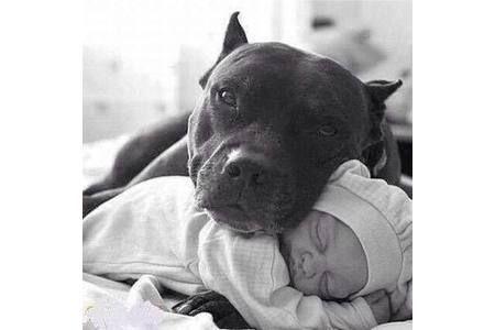Hundesteuer: Anerkennung des Wesenstestes bei Listenhunden