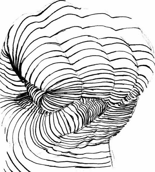 Contour Line Drawing Demo : Cross contour hand 기초 pinterest
