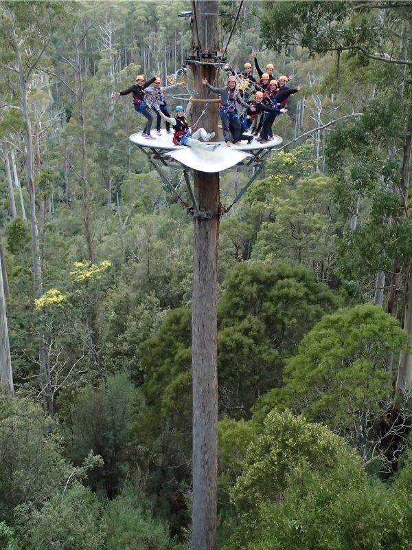 Hollybank Treetop Adventure - Zipline through the treetops is so much fun.
